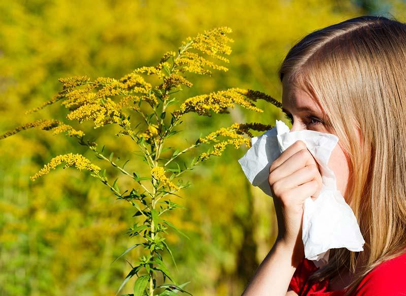 pollenschutzgewebe